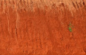 Kenyan red soil