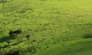 Ngong Hills III